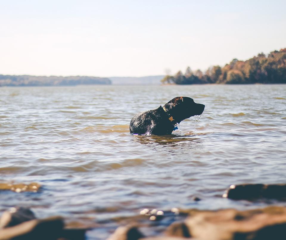 lac chien