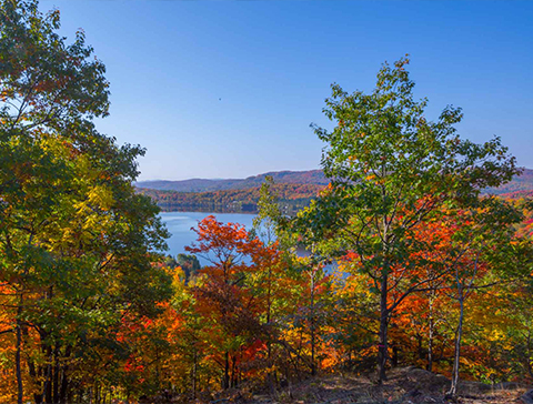vue hauteur lac automne bois
